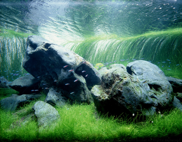 Nature aquarium stijl