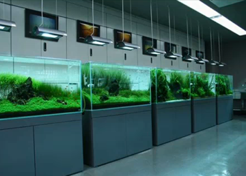 Nature style aquarium gallery
