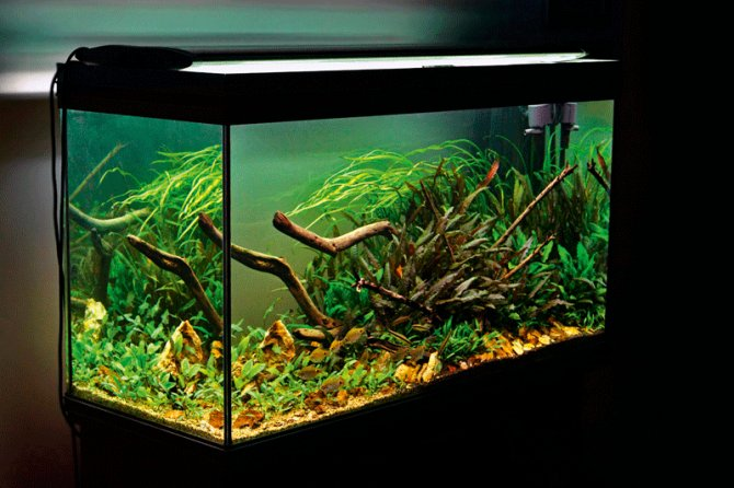 Een Aquarium Zonder Co2 Bemesting Is Dat Zelfs Mogelijk