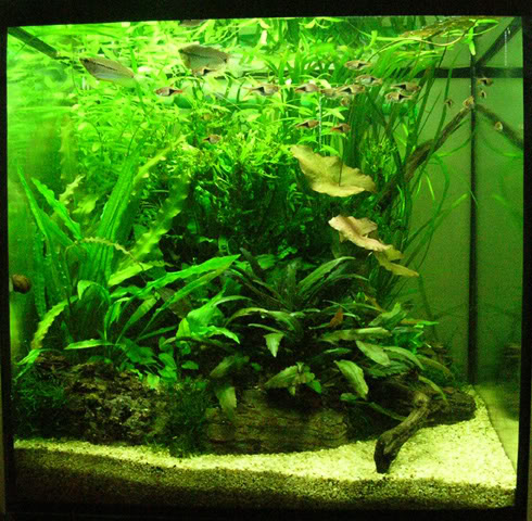 Aquarium zonder CO2