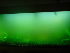 Groen water in aquarium
