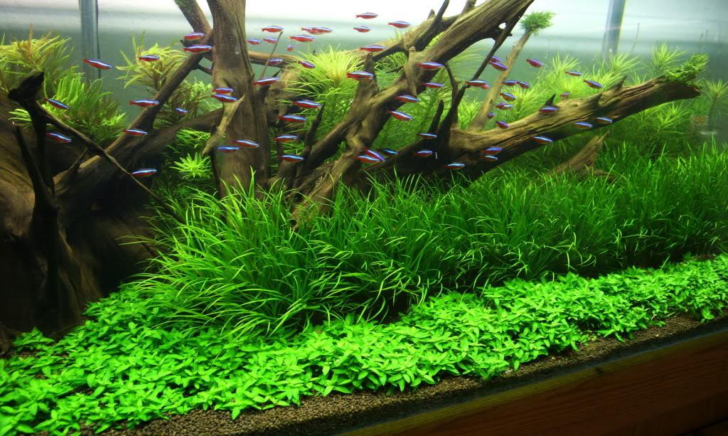 Estimative index tegen algen