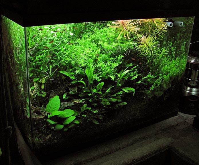 Estimative index: aquariumbemesting zonder onzin