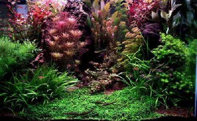 Aquariumplanten snoeien en planten
