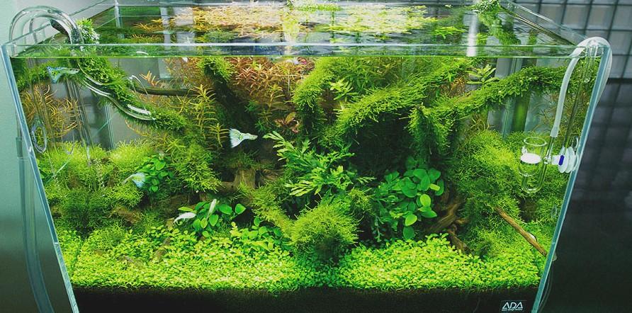 Een mooie Nature Style Aquarium