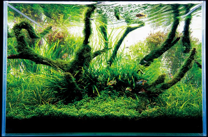 De planten in een Nature Style aquarium