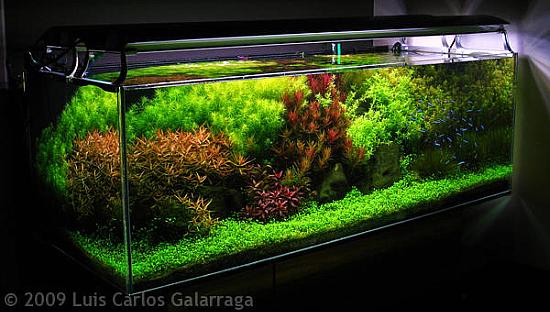 Het Nederlandse aquarium van Luis Galarraga