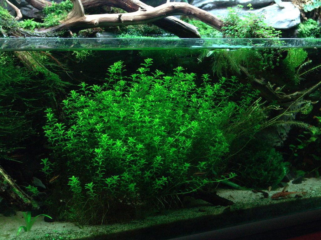 Geen co2 bemesting in aquarium