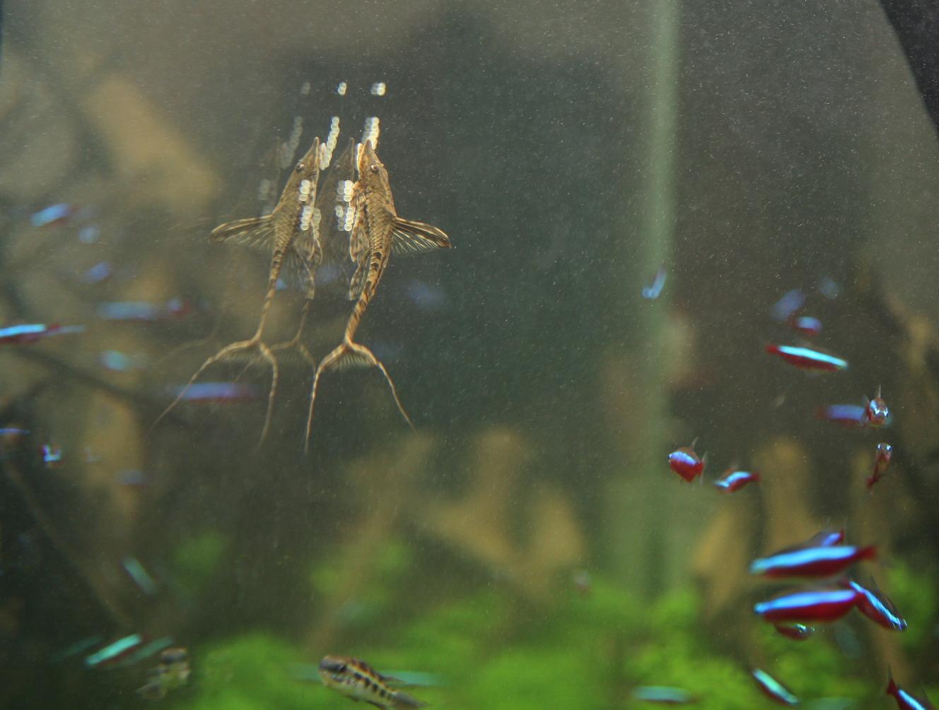 Is nitraat in het aquarium veilig?