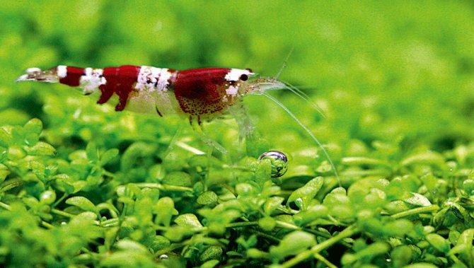 is nitraat in het aquarium schadelijk