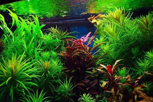 Aquariumbemesting & plantenvoeding voor het aquarium