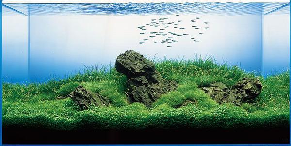 Het Iwagumi aquarium