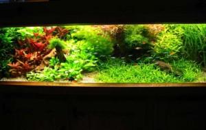Voorbeeld van een Nederlands aquarium