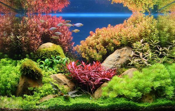 Aquarium inrichting