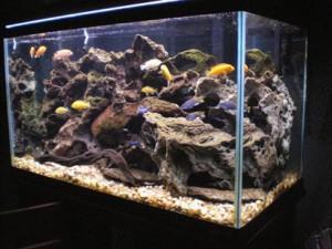 Voorbeeld van een Cichliden aquarium