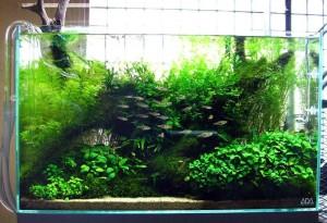 Voorbeeld van een Nature Aquarium