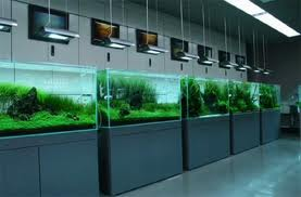 Aqua Design Amano - ADA