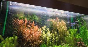 Een kaamlaag op het wateroppervlakte van het aquarium