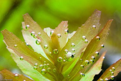 Bio CO2 voor het aquarium