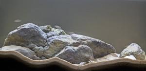 Een mooi ingericht cichliden aquarium door George Farmer
