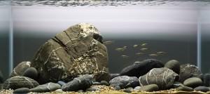 Een voorbeeld van een cichliden aquarium door George Farmer