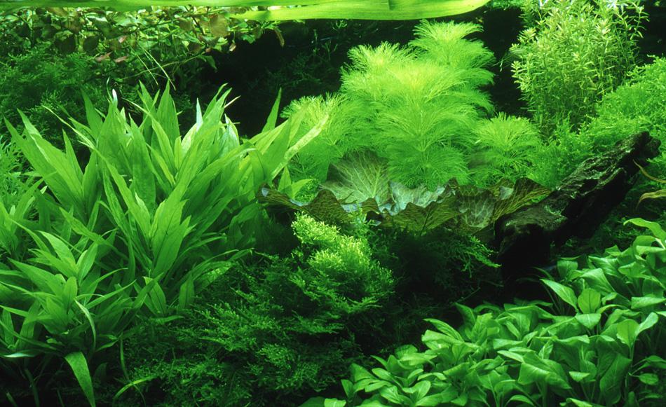 Welke voedingsbodem in het aquarium?