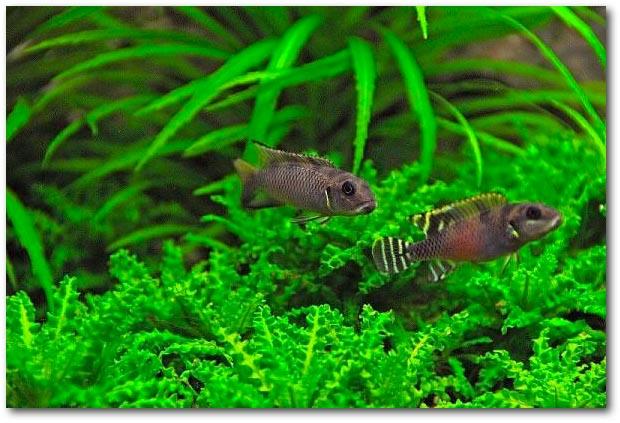 Is PO4 in het aquarium schadelijk voor vissen?