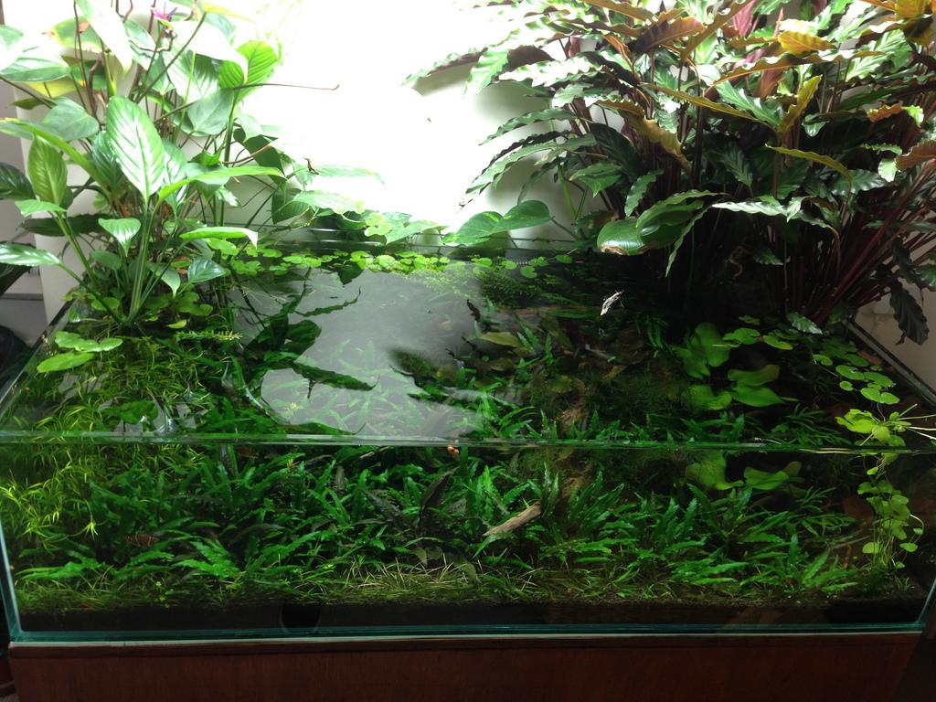 Het aquarium is volgroeid en vol planten