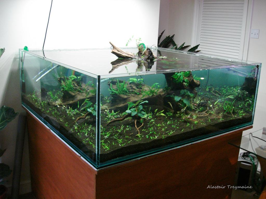 Het aquarium wordt gevuld
