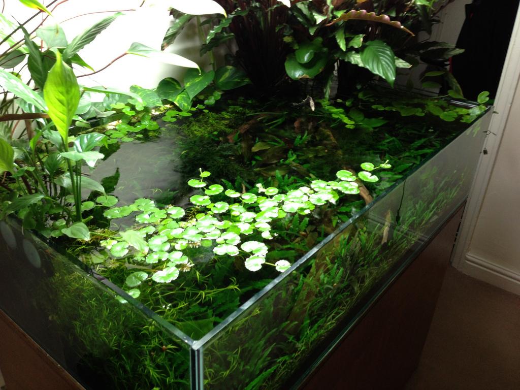 Drijfplantjes voor in het aquarium