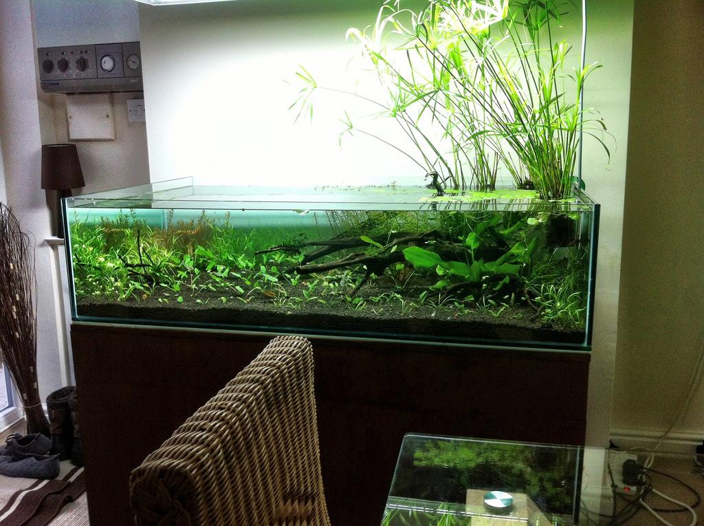 Het aquarium is gevuld en nog extra plantjes worden toegevoegd