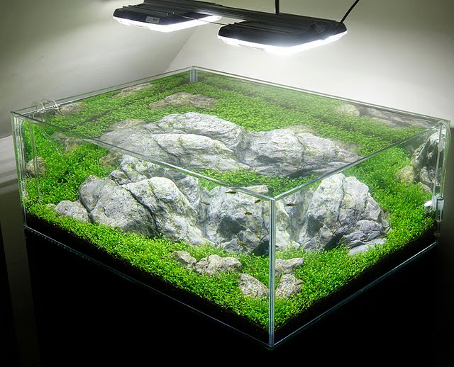https://www.aquascaping-blog.com/wp-content/uploads/2013/07/aquarium-verlichting.jpg