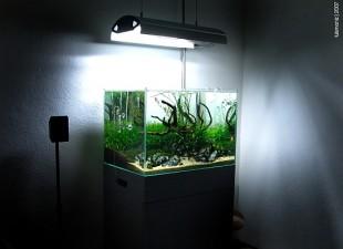 Beperk de verlichting om algen in je aquarium te vermijden