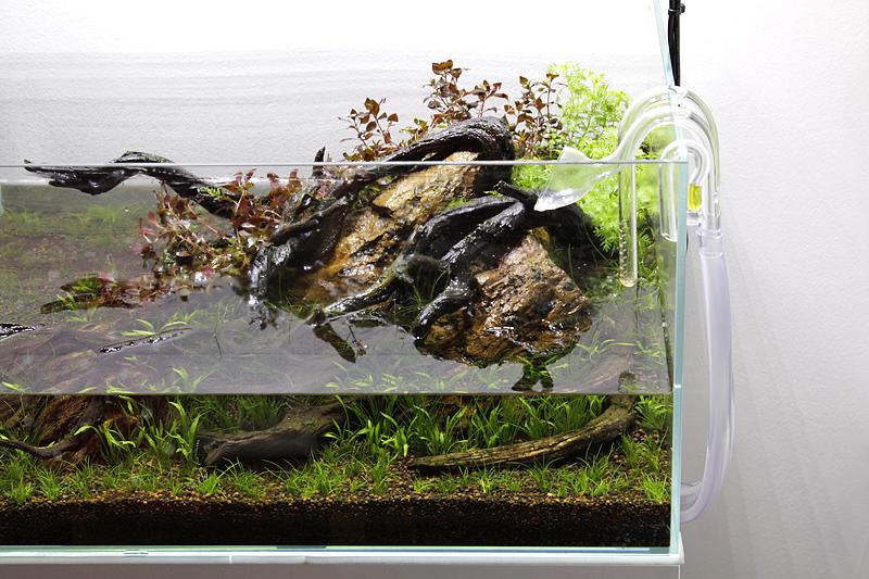 een aquarium opstarten 5 tips voor een probleemloze start