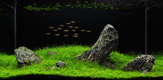 Verwijder alle techniek om een mooie aquarium foto te maken