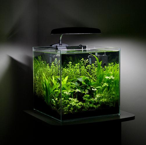 Aquarium foto's maken? Eerst de kamer verduisteren!