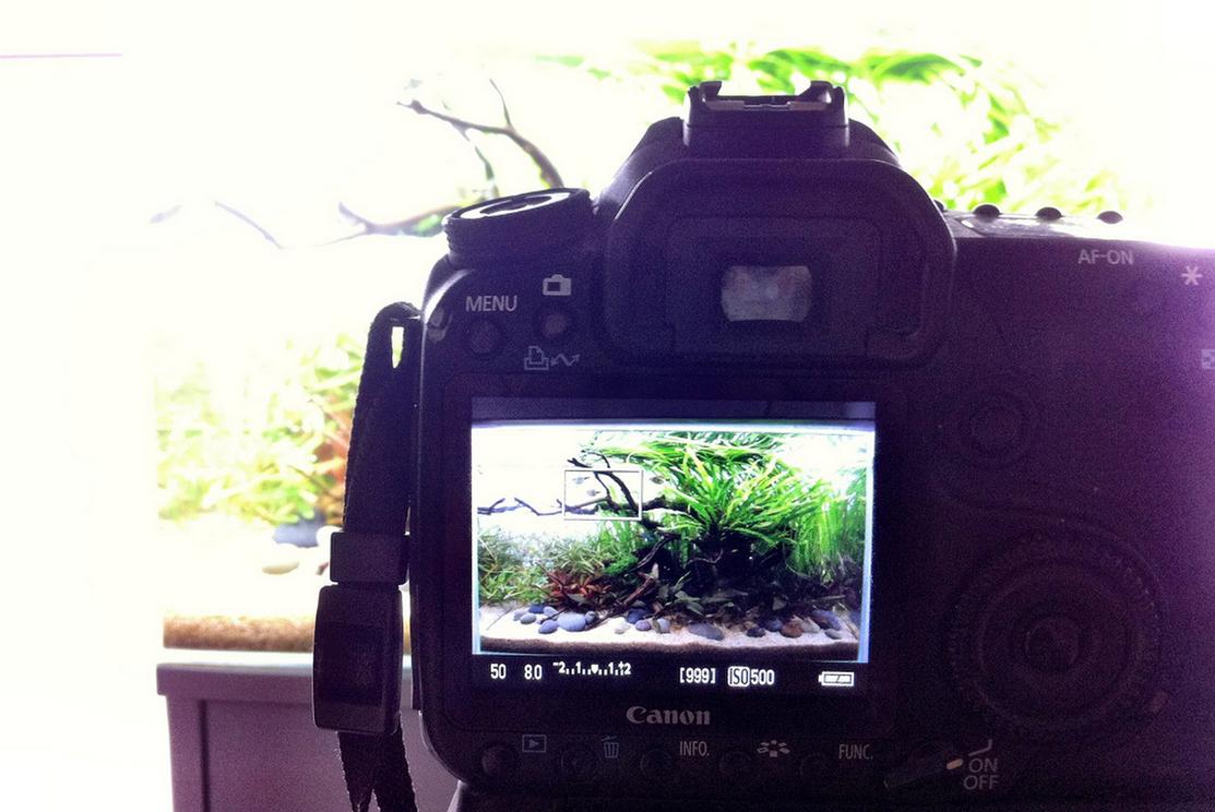 Je aquarium fotograferen: de beste instellingen voor mooie foto's