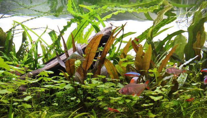 Aquarium Ebook om de strijd aan te gaan met algen!