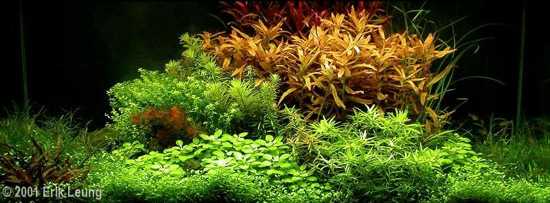 Erik Leung - Antagonisme in het aquarium