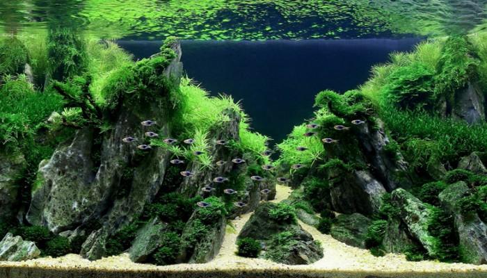 Zo herken je een CO2-tekort in je aquarium en krijg je gezondere aquariumplanten
