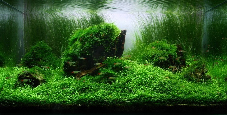 CO2 aquascape