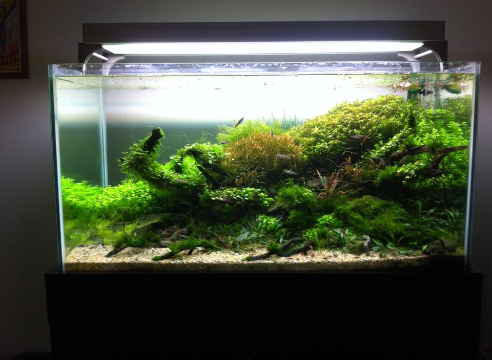 Aquascape met wortelhout