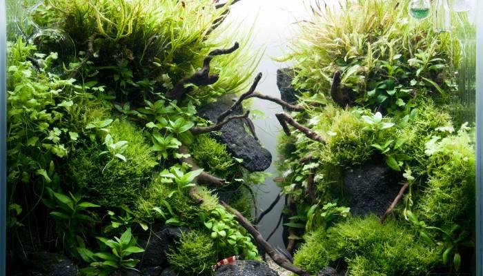 aquarium inspiratie nodig?
