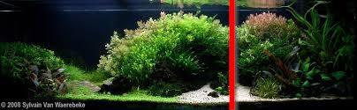 gouden ratio aquarium (aangepast)