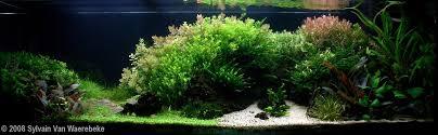 gouden ratio aquarium