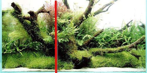gulden snede aquarium (aangepast)