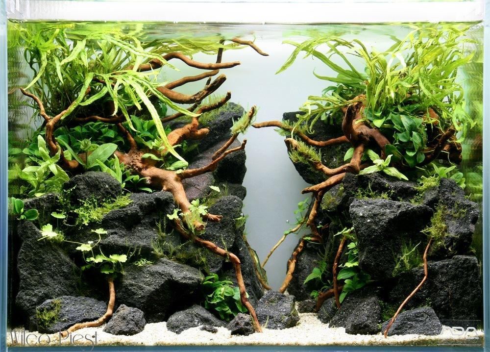 Een heel andere aquascape met dat wortelhout!