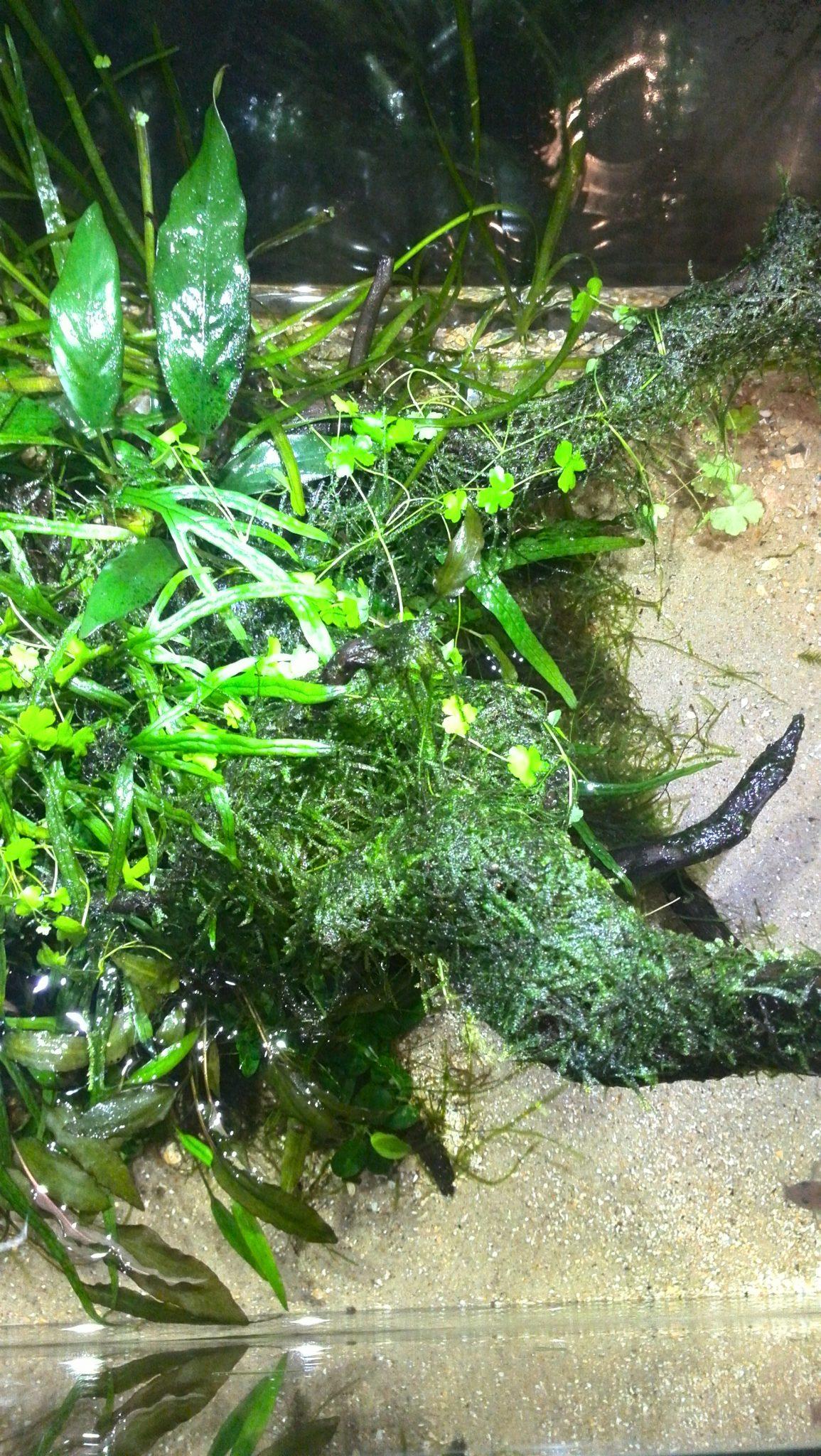 Aquarium waterverversing