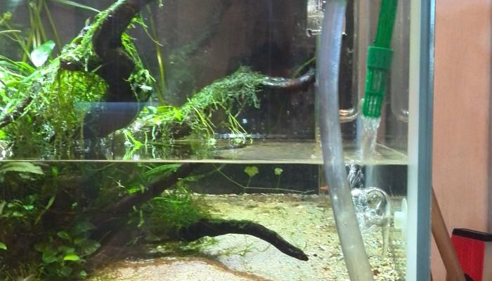 Je aquarium verversen & onderhouden binnen de 30 minuten
