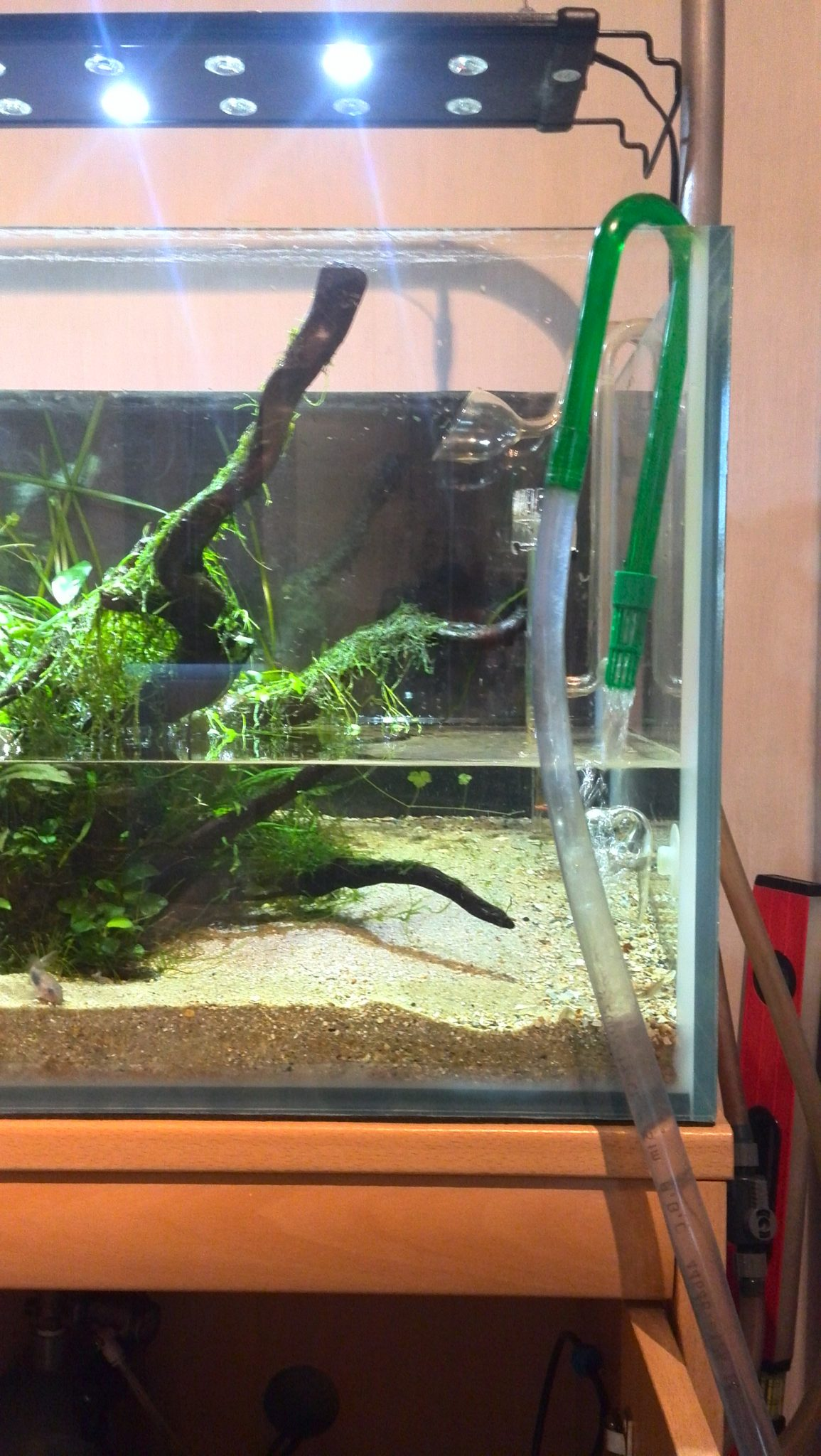 Onwijs Je aquarium verversen & onderhouden binnen de 30 minuten PP-41
